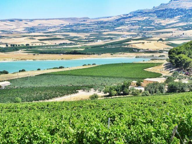 1398962491002-Planeta-Ulmo-Sambuca-di-Sicilia-4-