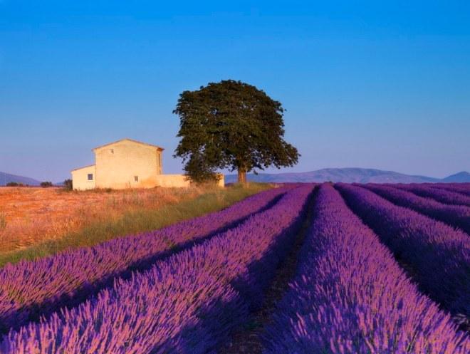 990_Provence_Day_Trip_from_Paris_on_the_TGV_Train__Summer_Only_ee2482b5e223901e12d9fdd9a826e115_original.jpg