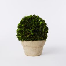 boxwood-round-trees-z